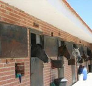 Clases equitación/hípica