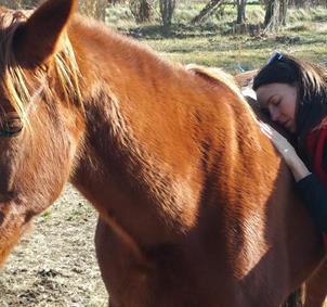 Emociones y caballos