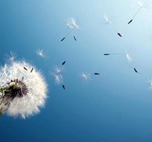 Grupo bienestar: mente, emociones, cuerpo, alma...