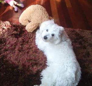 Monforte  Senderismo y mascotas