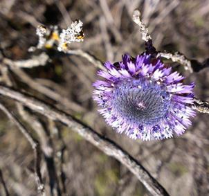 Fotografía profesional del reino vegetal