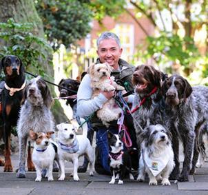Quedadas Caninas