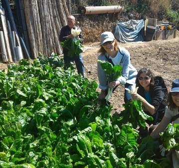 SALIDA: CAMINADA POR PARC AGRARI DEL BAIX LLOBR...