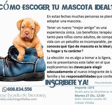 CHARLA: CLAVES PARA ELEGIR LA MASCOTA MÁS COMPA...