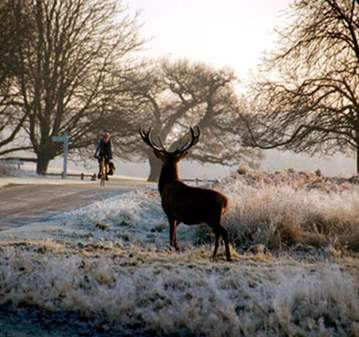 EXCURSION: CYCLING IN RICHMOND PARK
