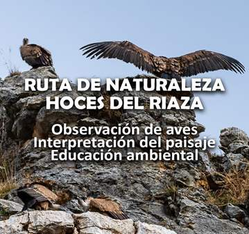 EXCURSIÓN: HOCES DEL RIAZA ORNITOLOGIA OBSERVAC...