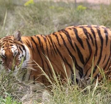 VISITA GUIADA: INTERACCIÓN CON ANIMALES SALVAJES
