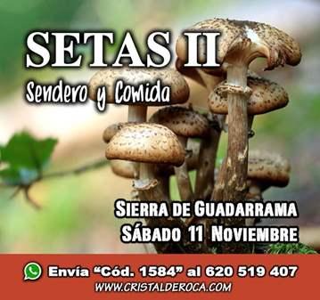 EXCURSIÓN: SETAS DE GUADARRAMA II - RUTA Y COMIDA