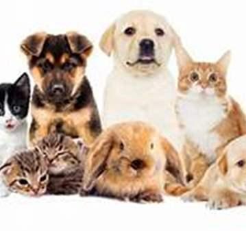 SESIÓN: COMUNICADORA ANIMAL - A DISTANCIA