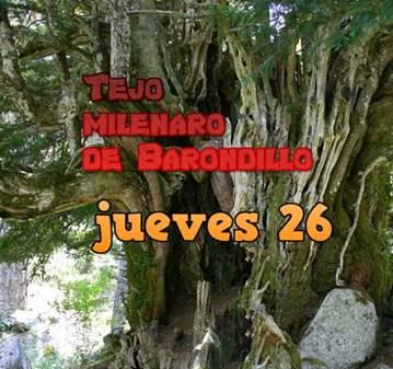 RUTA: TEJO MILENARIO DE BARONDILLO