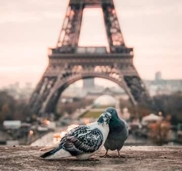 VIAJE DE 4D/3NOCHES CONOCE PARIS Y VALLE DEL LOIRA