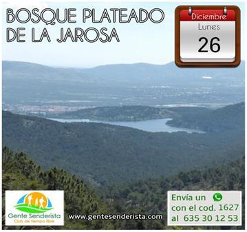 EXCURSIÓN: BOSQUE PLATEADO DE LA JAROSA