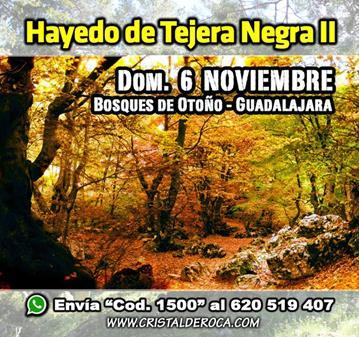EXCURSIÓN: HAYEDO DE TEJERA NEGRA, BOSQUES DE OTOÑO (II)