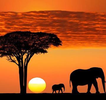 VIAJE: LA GRAN AVENTURA EN TANZANIA
