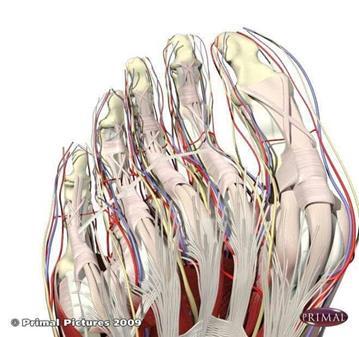 SESIÓN: CURSO: REFLEXOLOGIA OSTEOPÁTICA