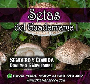 EXCURSIÓN: SETAS DE GUADARRAMA I - RUTA Y COMIDA (SOMOS 16)