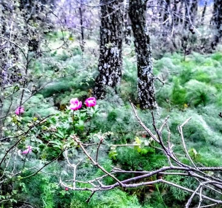 Baño de Bosque. Bosque Real LaHerrería El Escorial - pic4