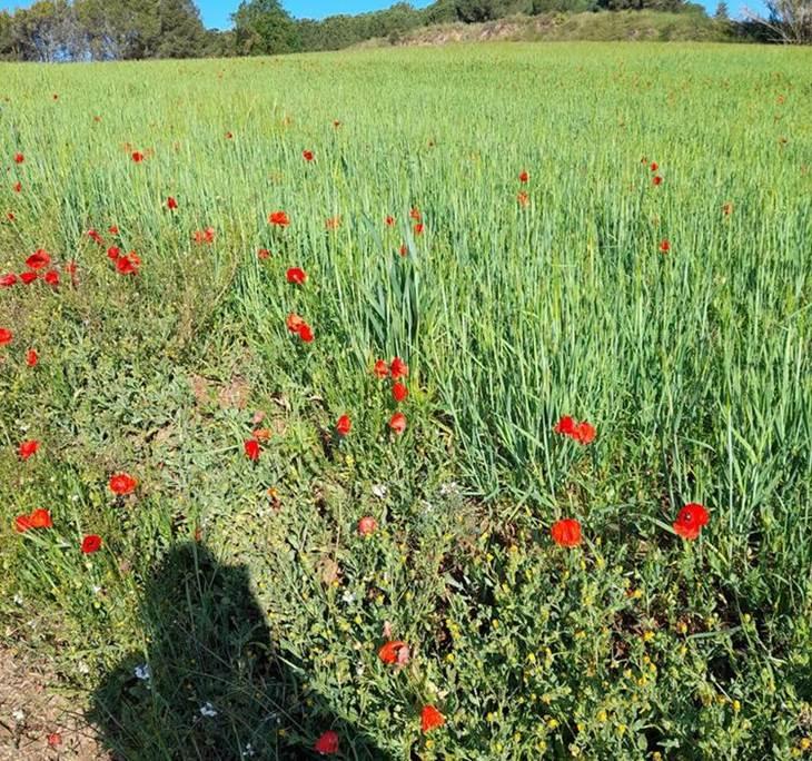 El Vallès a la primavera - pic0
