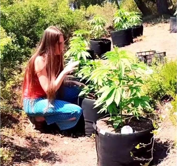 Cannabis Con-Ciencia  Seminarios formativos - pic0