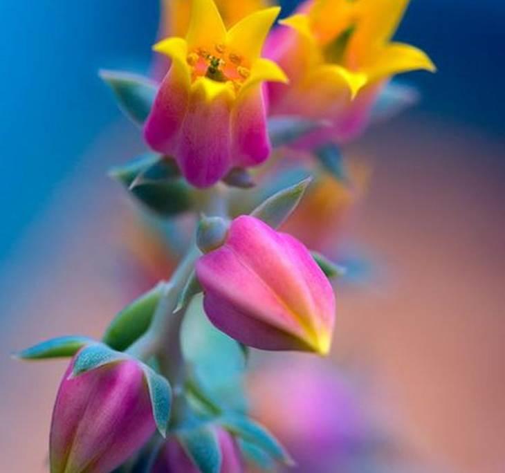 Conferencia Terapia Floral - pic0