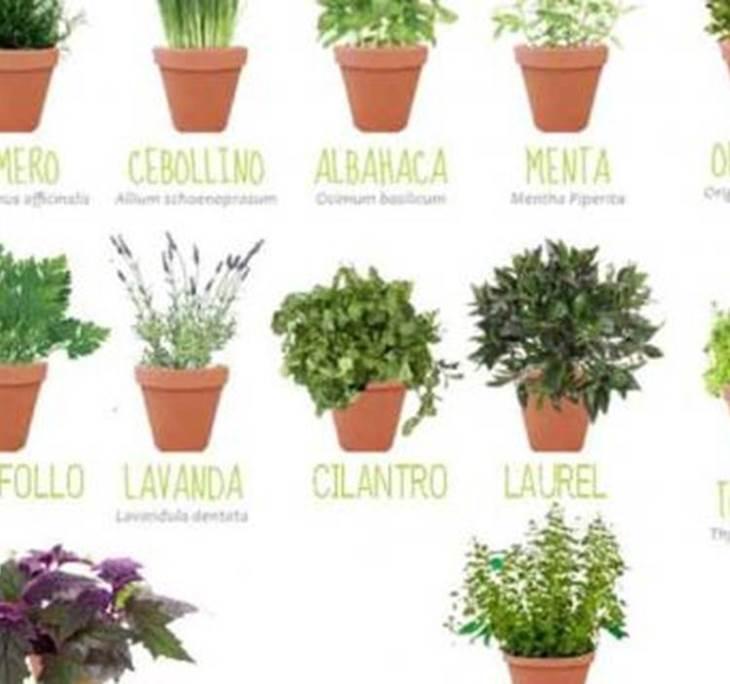 Taller cultivo y usos de plantas arom ticas uolala for Asociacion de plantas aromaticas