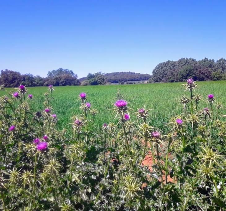 Caminada de primavera, de la Garriga a Cardedeu - pic0