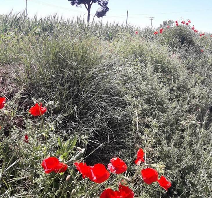 Caminada de primavera, de la Garriga a Cardedeu - pic3