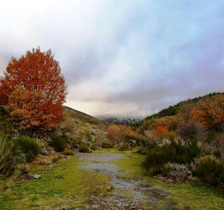 El Hayedo de la Tejera Negra, El Bosque Sagrado - pic0