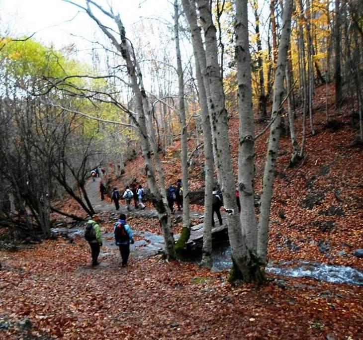 El Hayedo de la Tejera Negra, El Bosque Sagrado - pic2