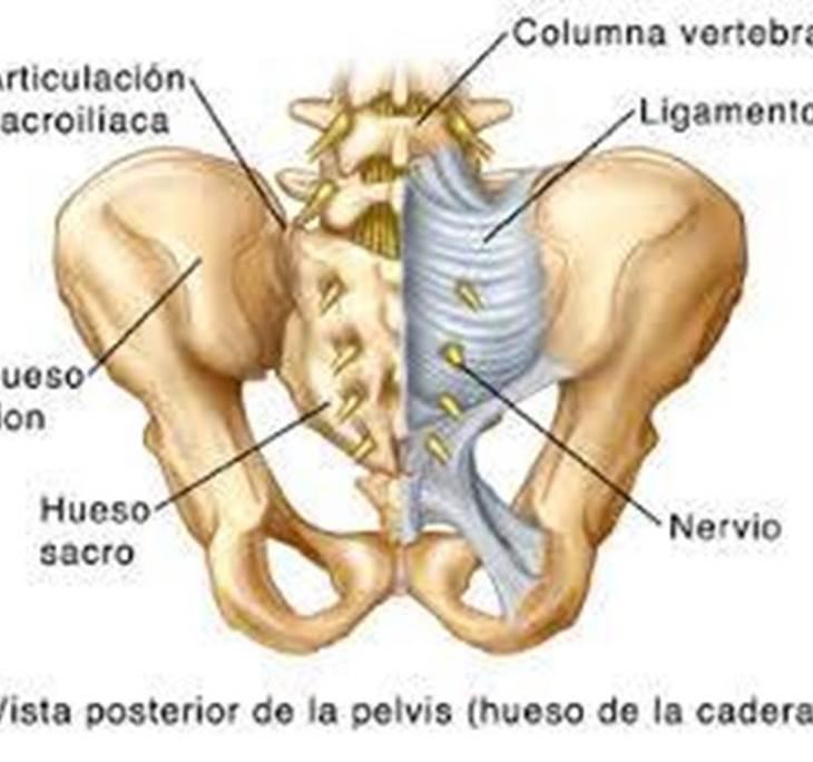 La articulación sacro-iliaca - Uolala