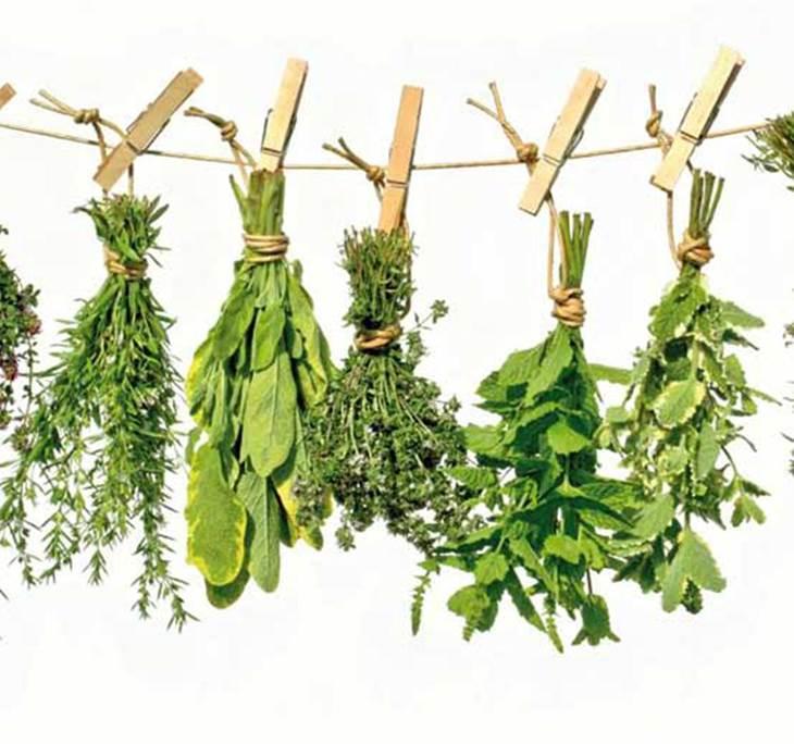 Las plantas medicinales m s comunes y beneficios uolala for Plantas ornamentales mas comunes