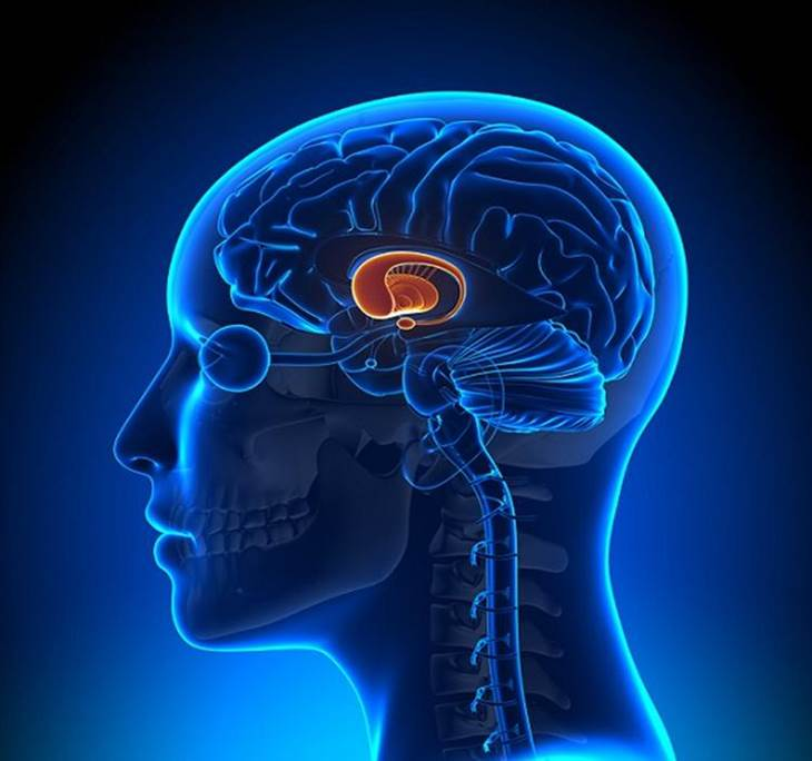 NeuroTraining: entrena tu cerebro y hazlo crecer - pic0