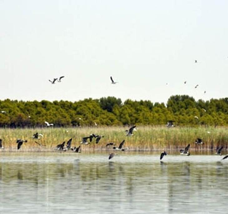 LAGUNAS MANCHEGAS Ornitologia Observación de aves - pic1