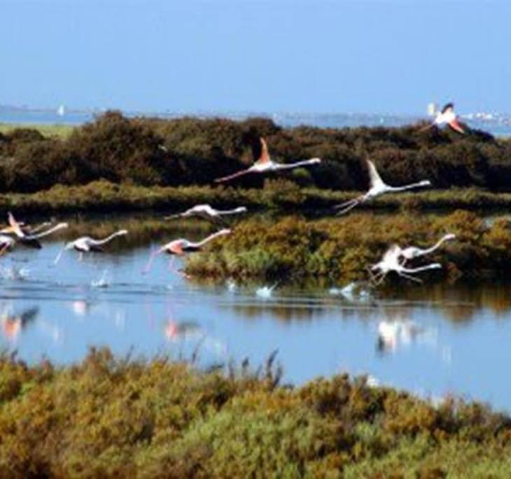 Parque Natural Bahía de Cádiz - pic0