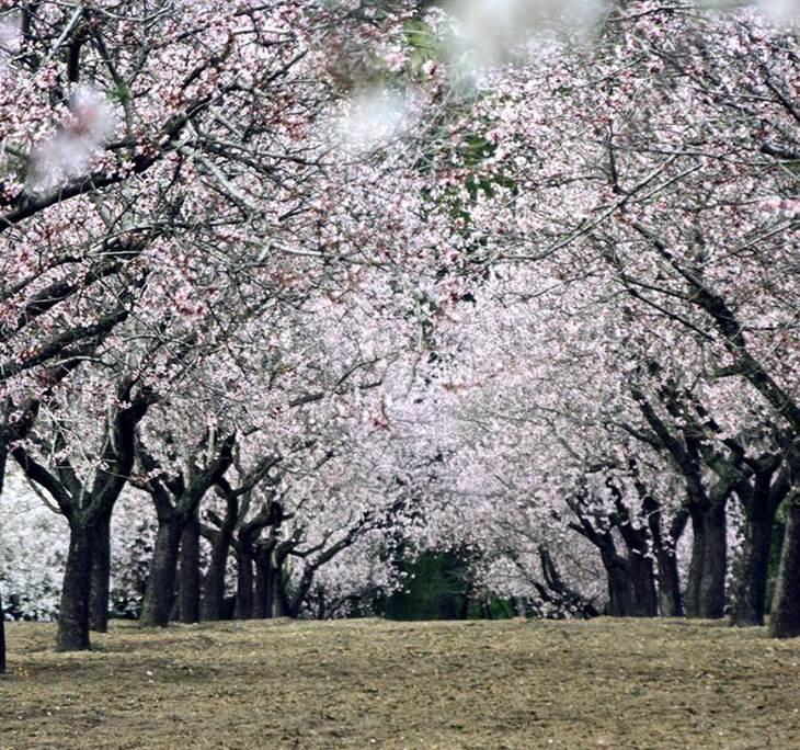 Visita guiada paseo para ver los almendros en flor y o for Piso quinta de los molinos