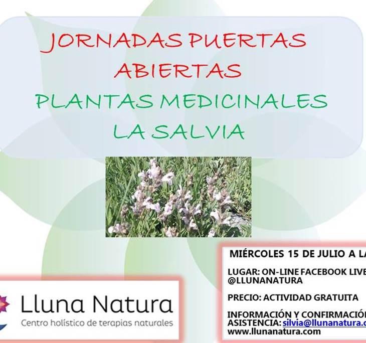 Plantas medicinales del mediterráneo. La Salvia - pic0