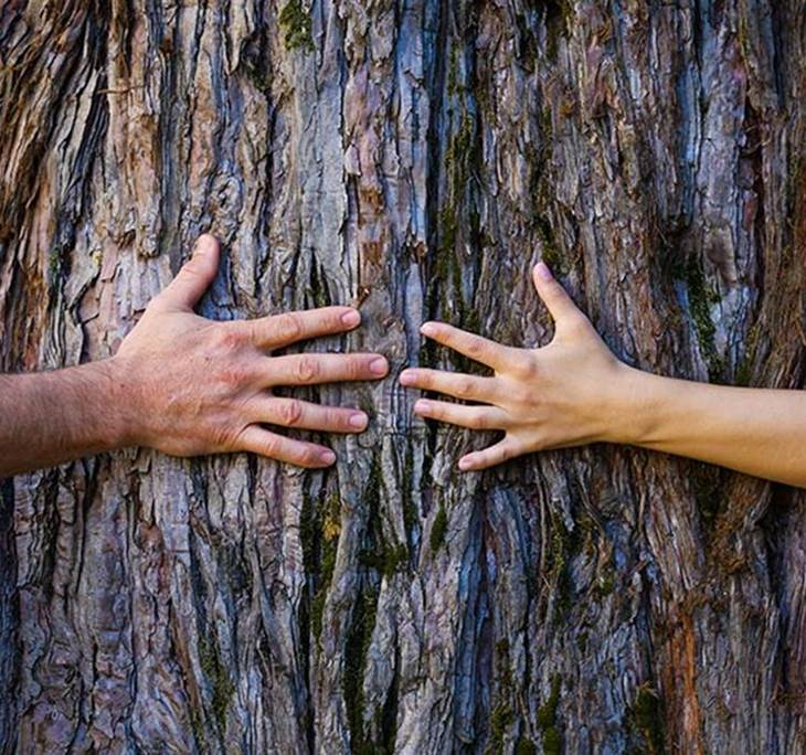 Sanando las memorias de tu árbol familiar - pic0