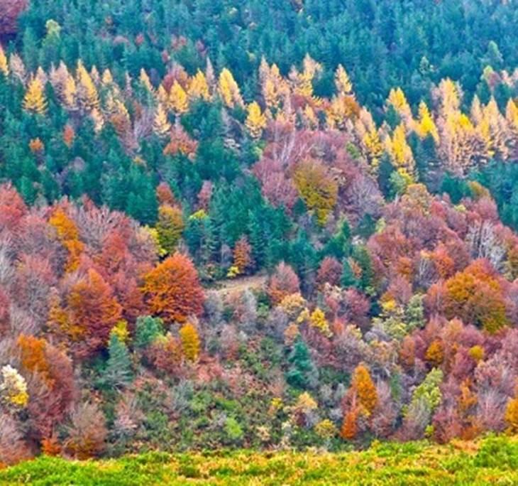 Selva de Irati, El mayor Hayedo de España - pic2
