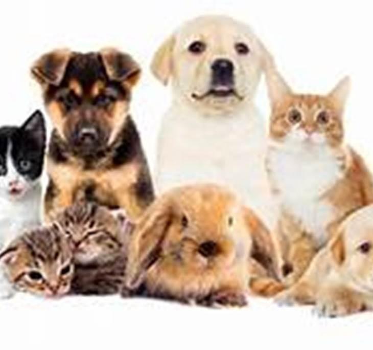 COMUNICADORA ANIMAL - A DISTANCIA - pic0