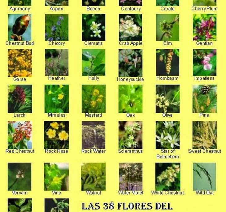 Taller Flores de Bach - pic1