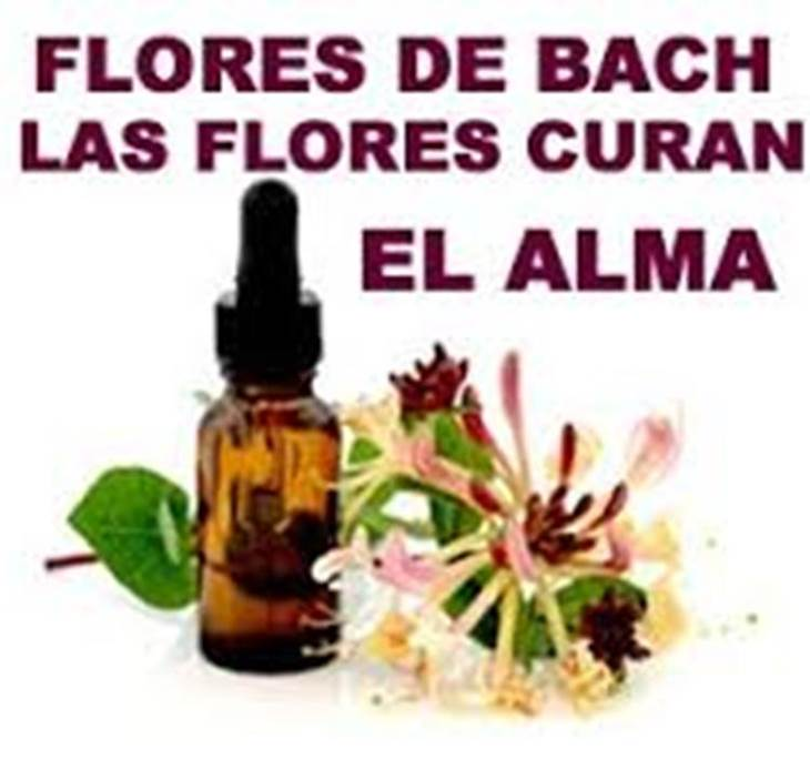 Taller Flores de Bach - pic3