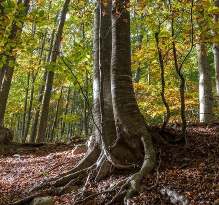 Terres de bruixes i plantes remeieres - pic3